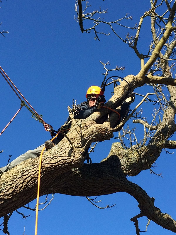 Areal Tree Inspection