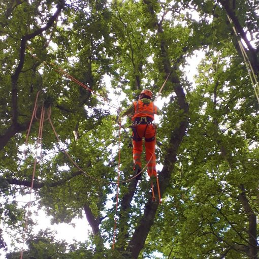 Traversing between trees